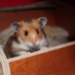 Hamster Sandbad