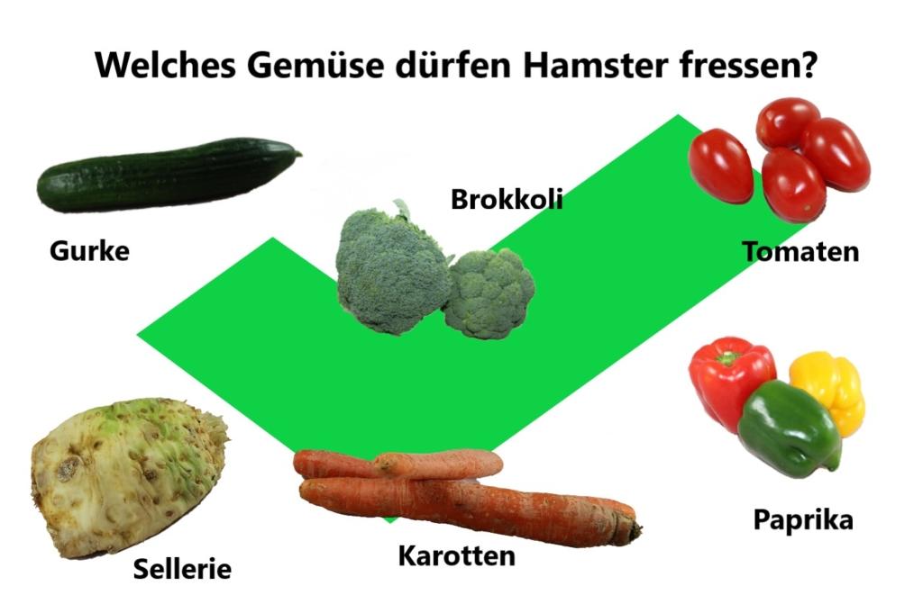 Welches Gemüse dürfen Hamster fressen?