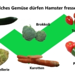 Gemüse für Hamster