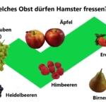 Obst für Hamster