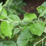 Zweige und Nagematerial für Hamster