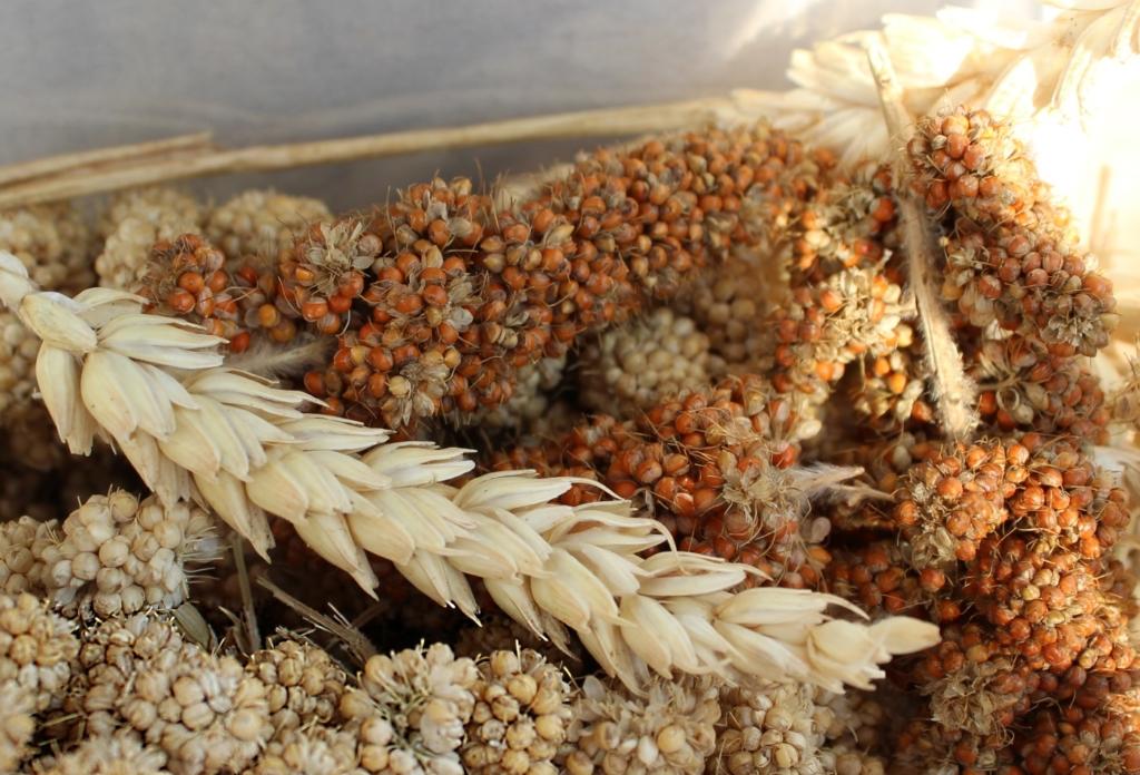 Getreide und Saemereien für Hamster