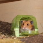 Hamster Transportbox